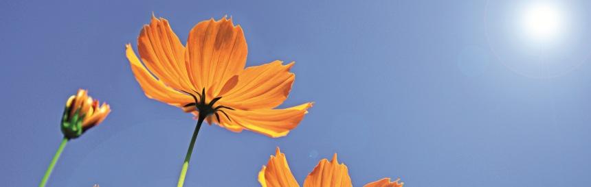 Blumen nueva